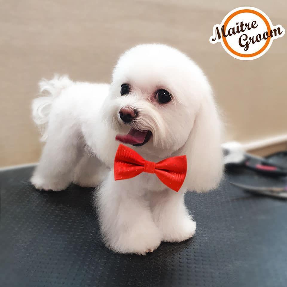 Всех настоящих Мужчин с Праздником!... #dog #dogsofinstagram #dogs #puppy #dogstagram #instadog #pet #doglover #love #dogoftheday #cute #doglovers #instagram #pets #of #puppylove #doggo #puppies #cat #doglife #puppiesofinstagram #ilovemydog #dogsofinsta #animals #hund #doggy #petstagram #k #animal