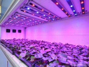 Japan Use The Best Led Grow Light To Shorten The 1 3 Of The Lettuce Growing Season Grow Lights For Plants Best Led Grow Lights Led Grow Lights