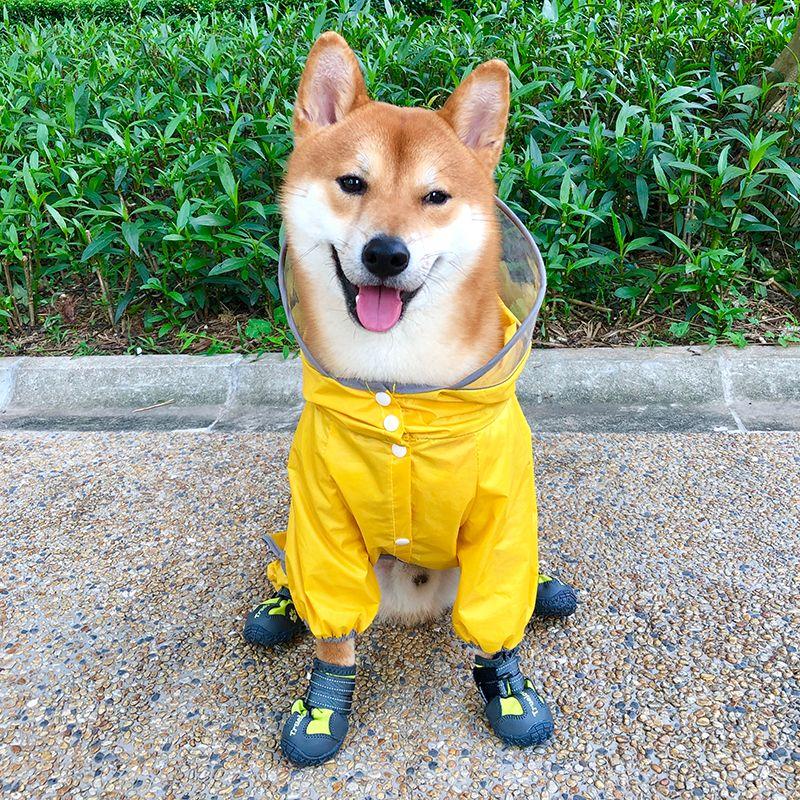 Yellow Dog Raincoat Waterproof Dog Raincoat With Images