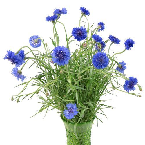 Blue Cornflowers Inexpensive Wedding Flowers Wedding Flowers Blue Wedding Flowers