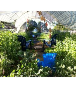 Diy Hoop House Trellis With Images Greenhouse Plans 400 x 300