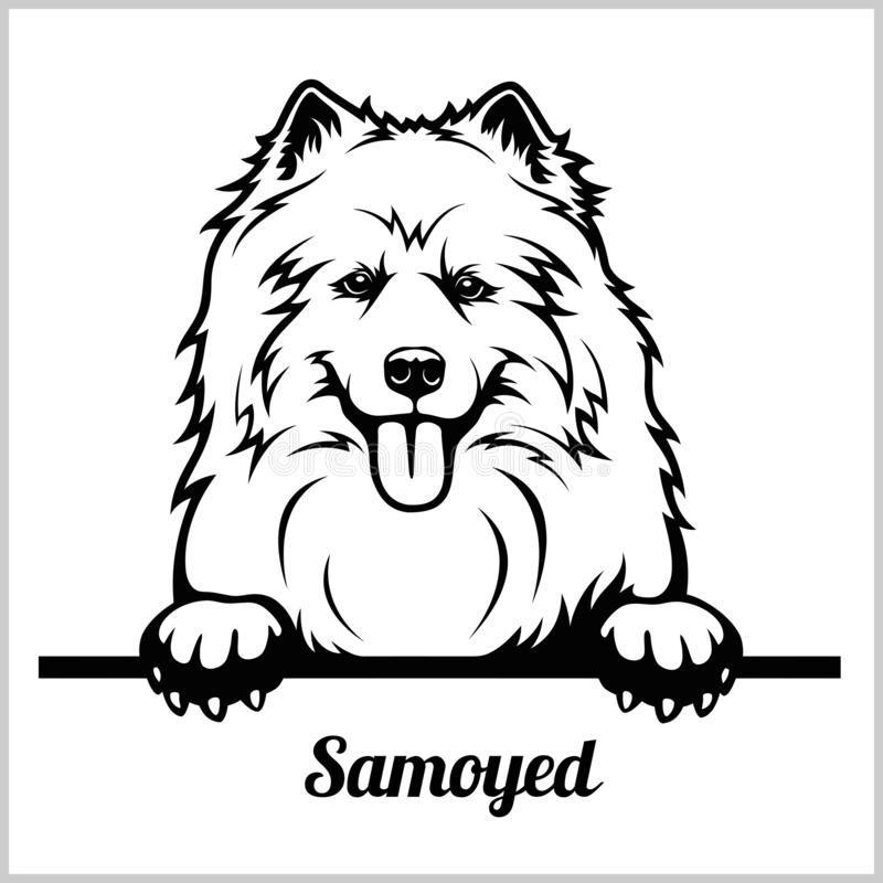 Samoyed - Peeking Dogs - Breed Face Head Isolated