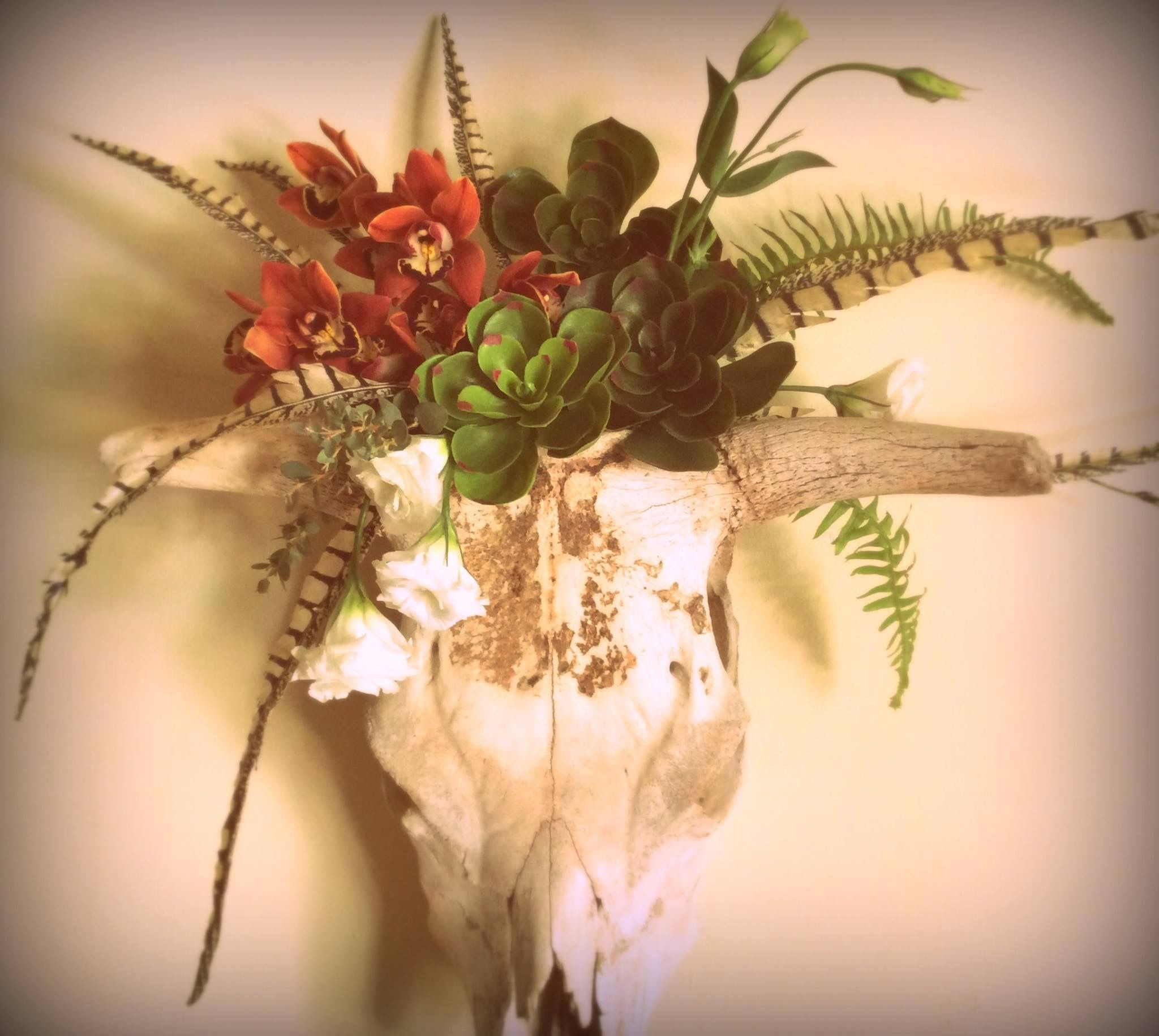 Cow skull with succulents, flowers and feathers, A Garden of ...