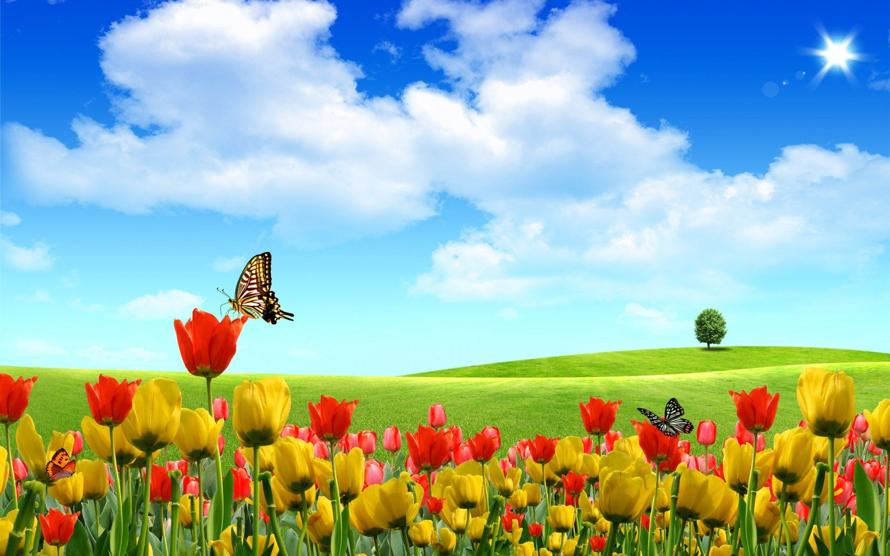 Flower field tulip flower wallpaper the wallpaper desktop flower flower field tulip flower wallpaper the wallpaper desktop mightylinksfo