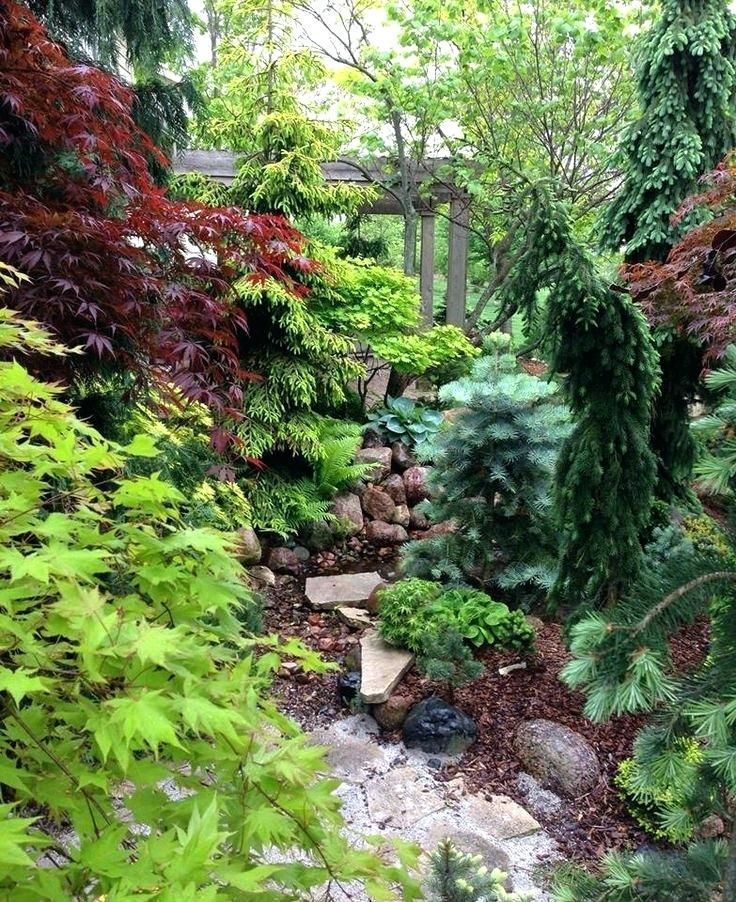 conifer garden ideas maples and conifers in the garden ...