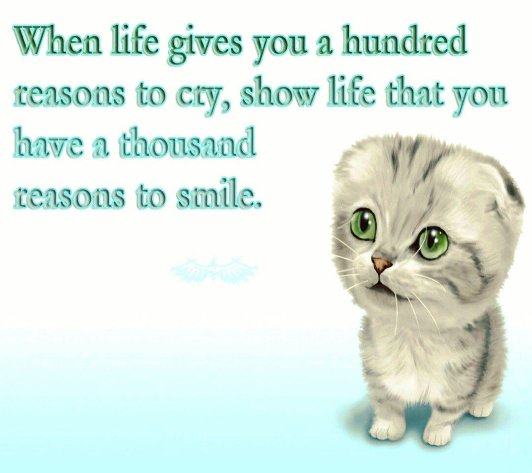 Indeed Twinkling Tuesday Tuesday Twinklingtuesday Life Athousandreasons Smile Attitudechangeseverything Kitten Motivation Reasons To Smile Kittens