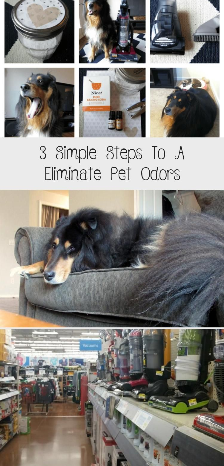 The Right Vacuum Cleaner With A Diy Carpet Sprinkle Will Eliminate Pet Odors In Your Home And Leave Your Carpets In 2020 Pet Odors Pet Smell Carpet Cleaning Pet Stains