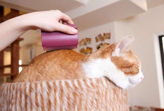 Rolling Cat Brushes Cat Grooming Tools Cat Grooming