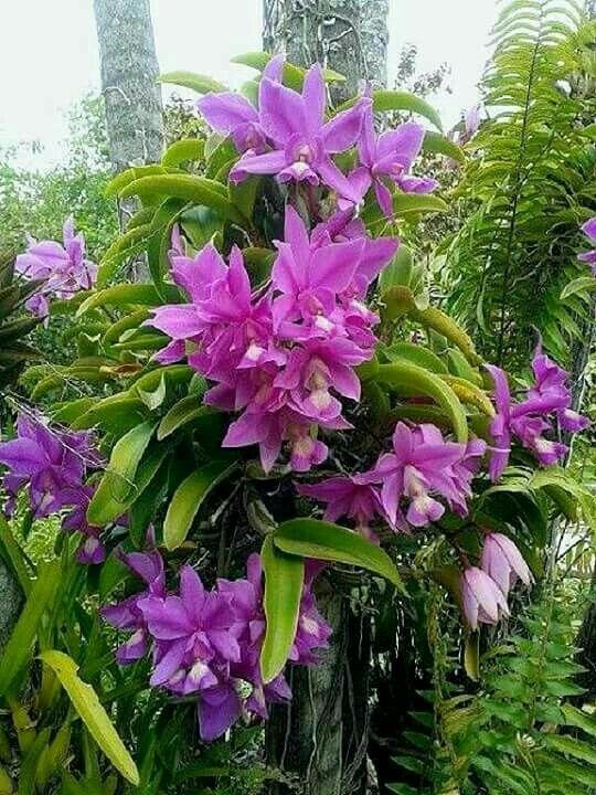 Muy Bellas | Flores Y Plantas | Pinterest | Zuhause, Einrichten ... Blumen Behaltern Zu Hause