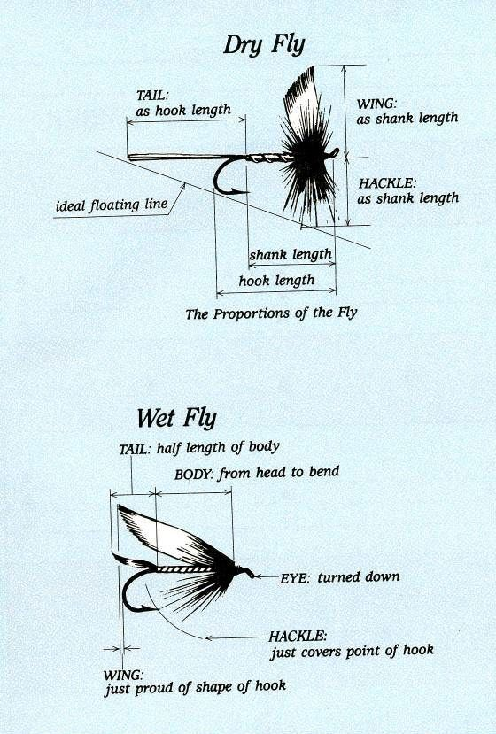 FlyProportions jpg w560h829 | FLY TYING, DRY FLYS | Fly fishing tips