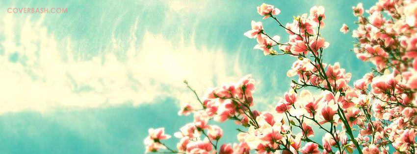 Lovely Caeli Flowers Facebook Cover Cover Photos Facebook Cover Photos Facebook Cover Images