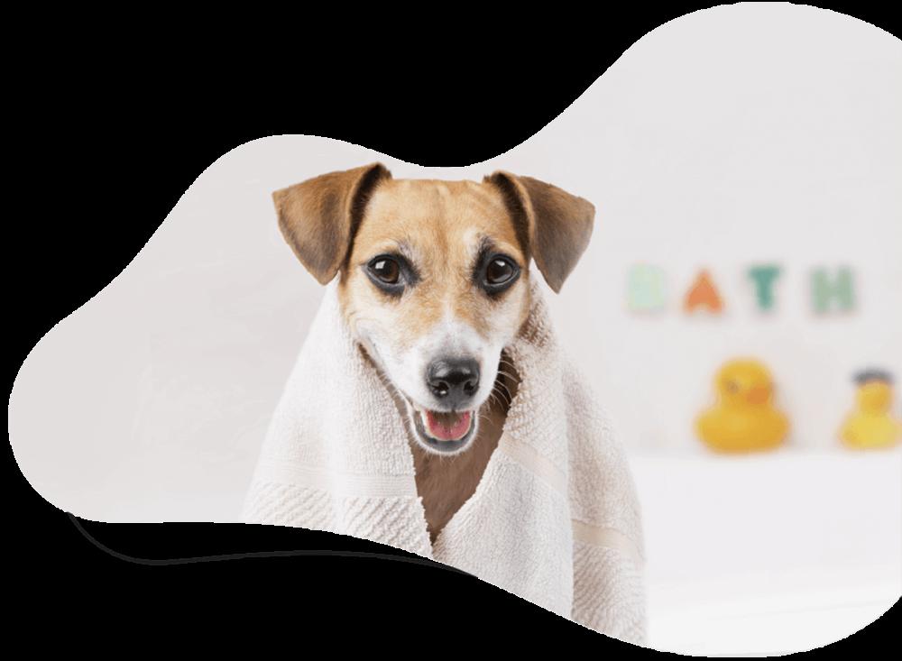 3dpets ผล ตภ ณฑ อาบน ำเพ อส ตว เล ยง ผล ตจากธรรมชาต ใช สม นไพรไทย 100 ส น ข แมว กระรอก