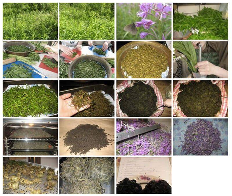 как готовить иван чай пошаговая инструкция