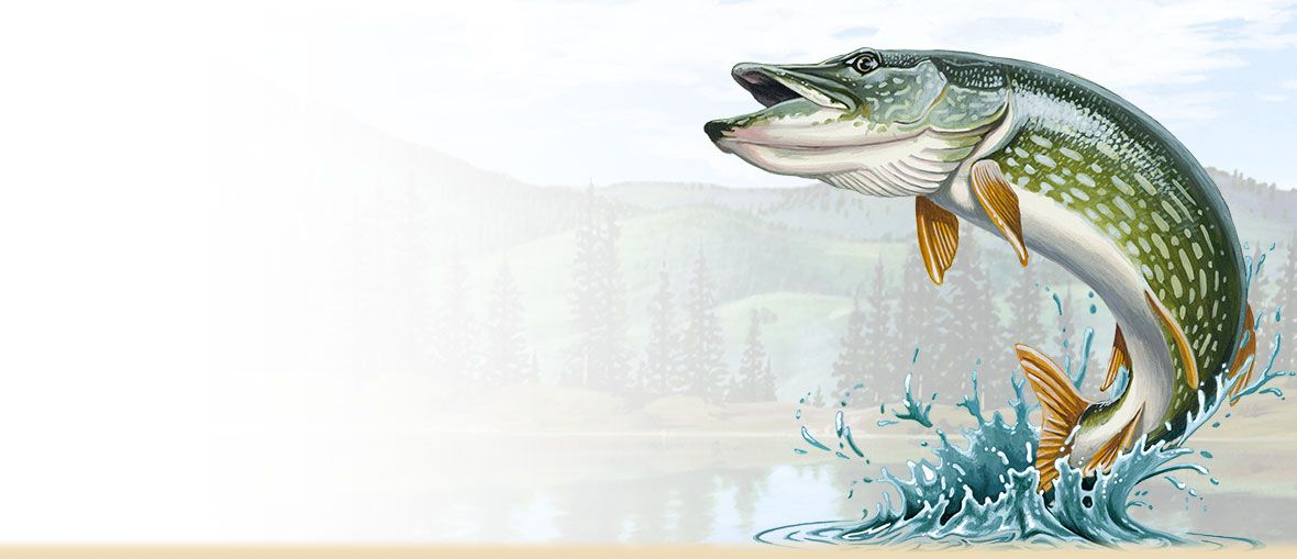 how to cook pike fish