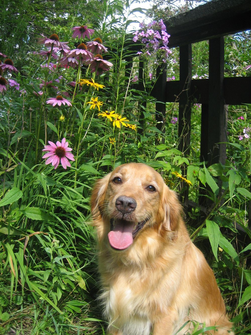 Lady Maggie amongst the Wildflowers Photo by Joyce Hodgson -- National Geographic Your Shot