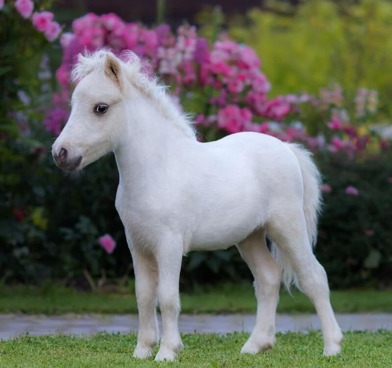 70 Miniature Horse Names Cute Horses Cute Baby Horses Cute Ponies