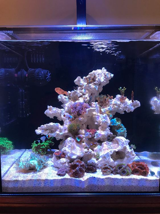 Waterbox Nano Owner S Thread Page 2 All In One Tanks Nano Reef Community En 2020 Peceras