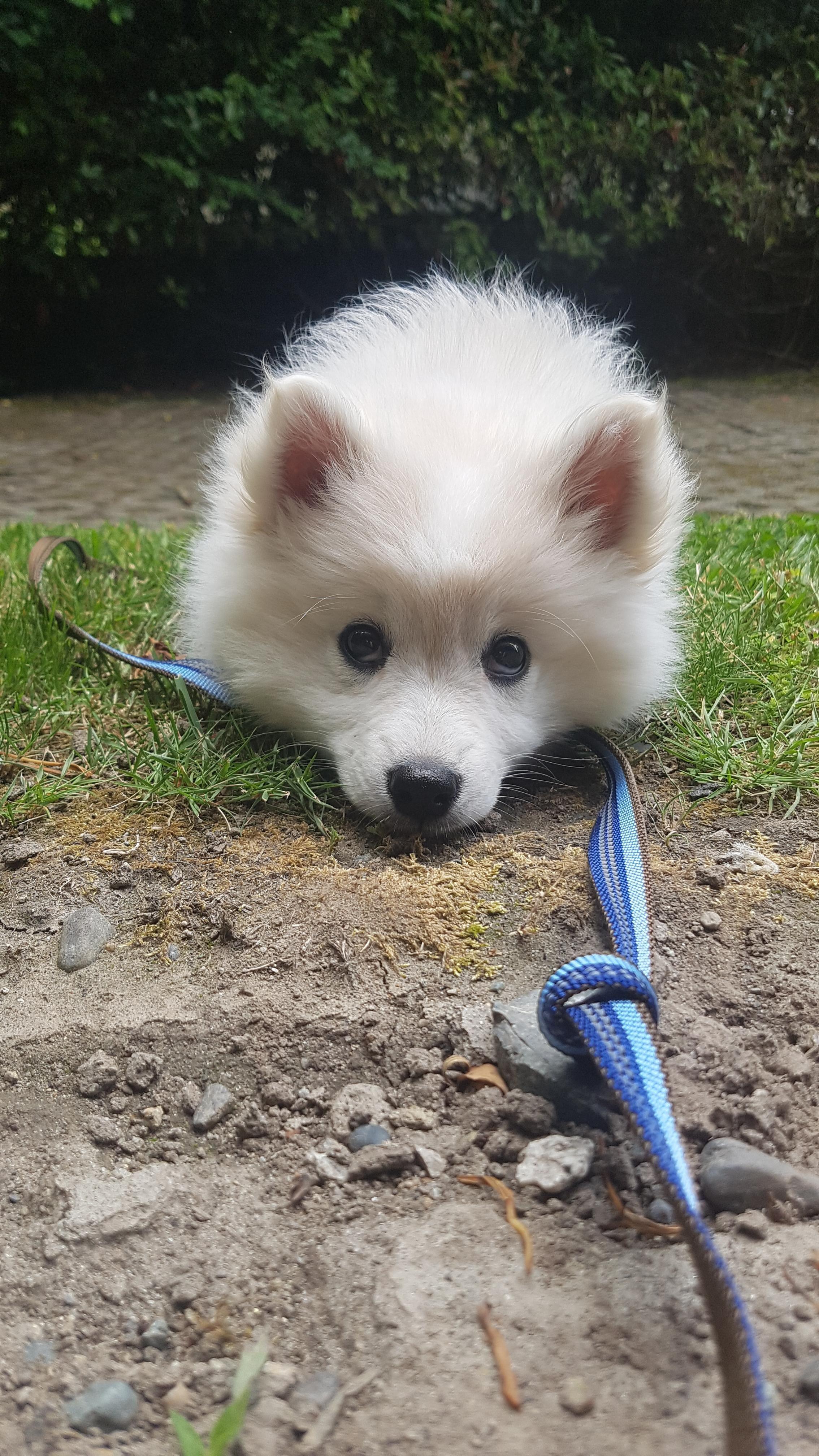 Then Vs Now Dog Leash Training Dog Training Doberman Puppy