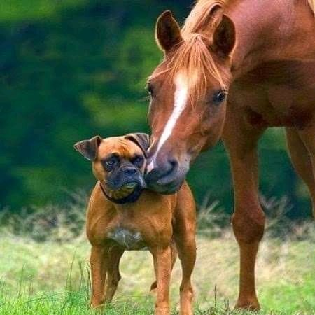 Mary Sol On Twitter Boxer Dogs Funny Animals Pretty Horses