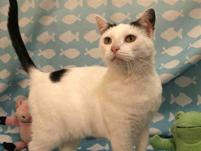 Caroline Pittsburgh Pa Petharbor Com Animal Shelter Adopt A Pet Dogs Cats Puppies Kittens Humane Society Spca Animals Cat Adoption Animal Shelter