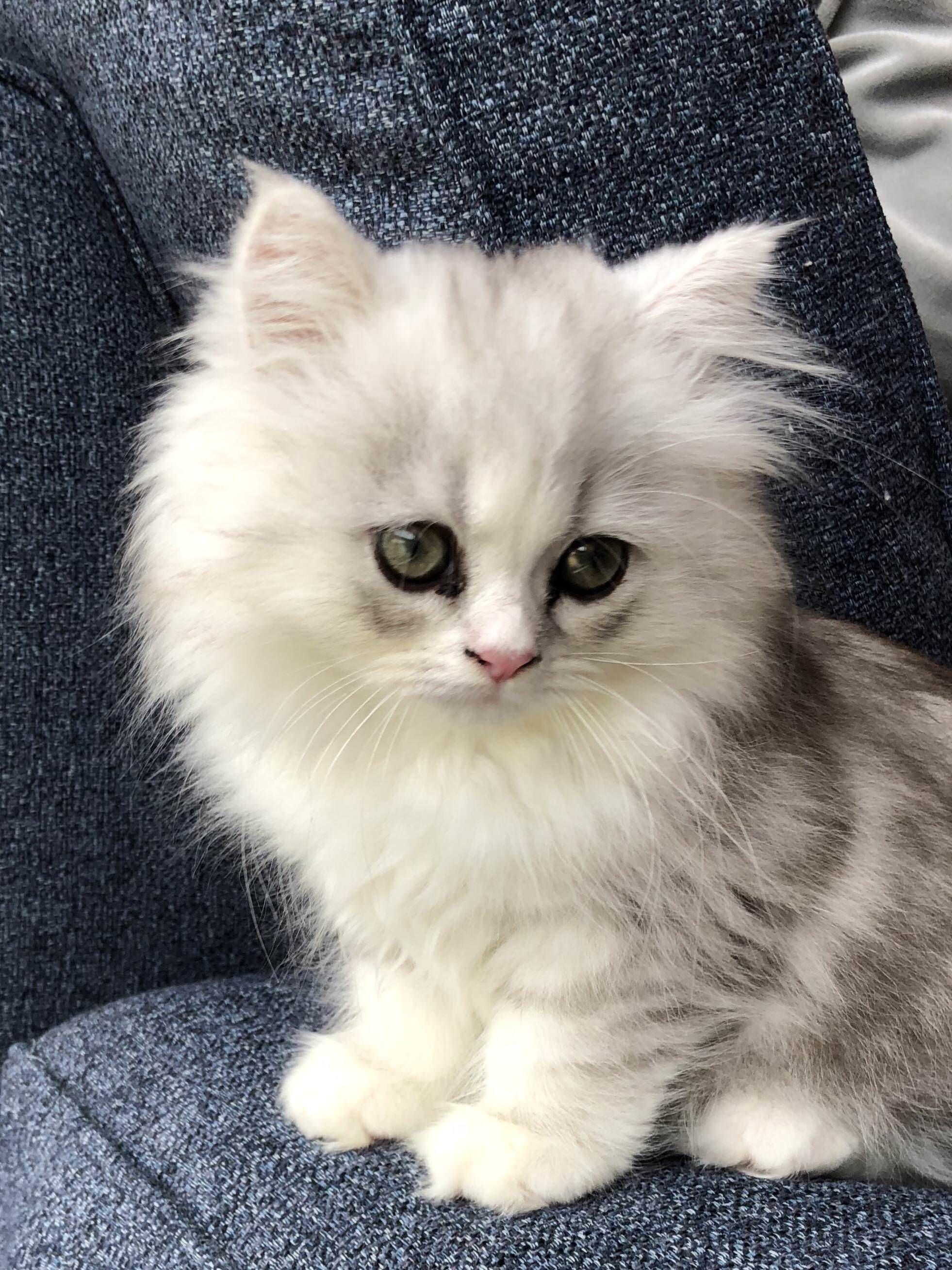 Reddit Meet Lulu Cute Baby Animals Pretty Cats Kittens Cutest