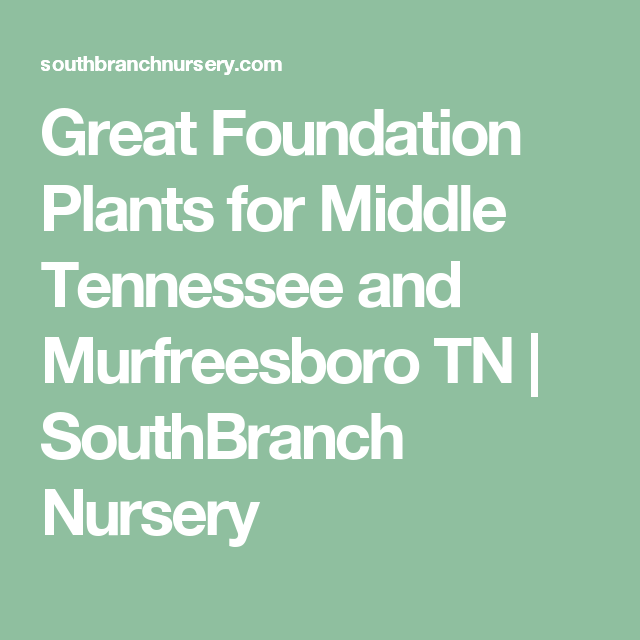 Great Foundation Plants for Middle Tennessee and Murfreesboro TN ...