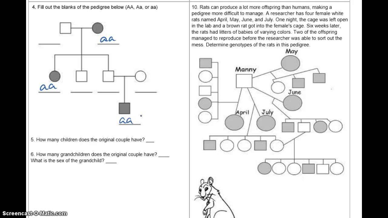 Pedigree Charts Worksheet - worksheet