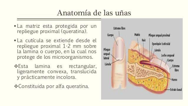 Resultado de imagen de hiponiquia | Dermotricologia | Pinterest ...