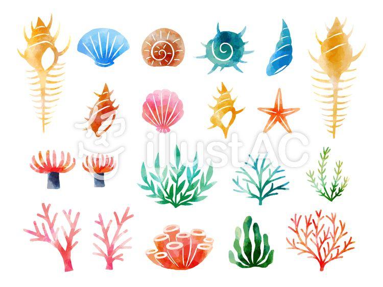 貝と海藻セット イソギンチャク イラスト 魚イラスト イラスト