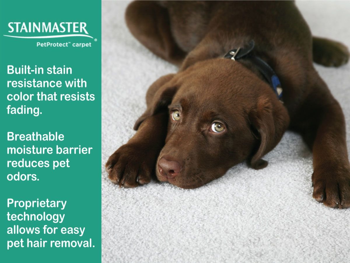 We all love our pets...but don't let the first sign of