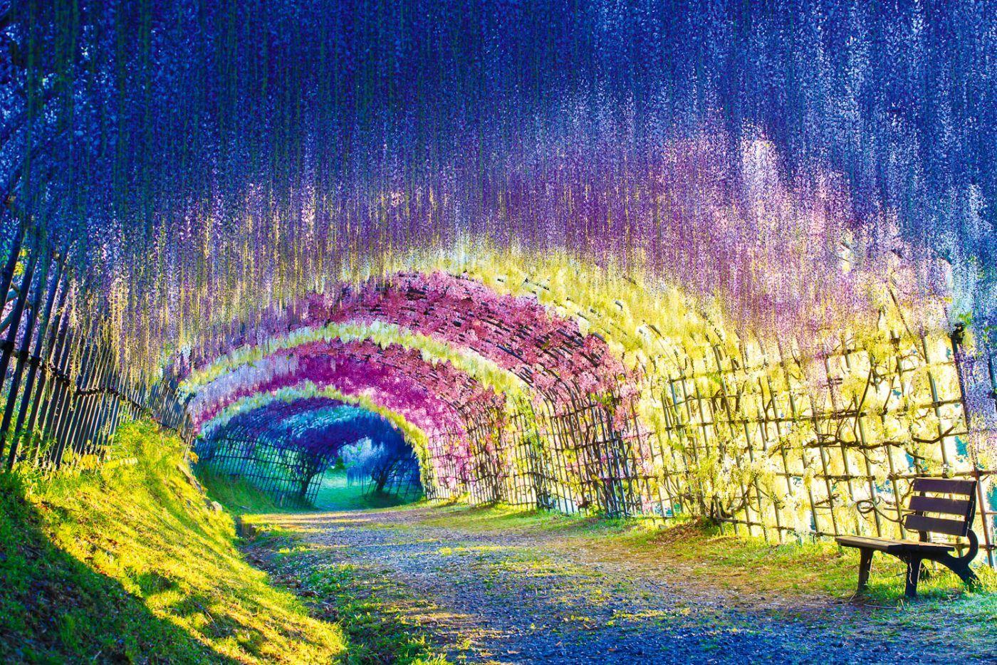 2aba7248da60fb40b69a7f8f2d592a51 - Wisteria Tunnel At Kawachi Fuji Gardens Kitakyushu Japan