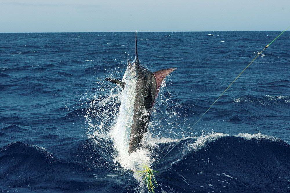 Cape Verde Offshore Fishing For Marlin Fishin