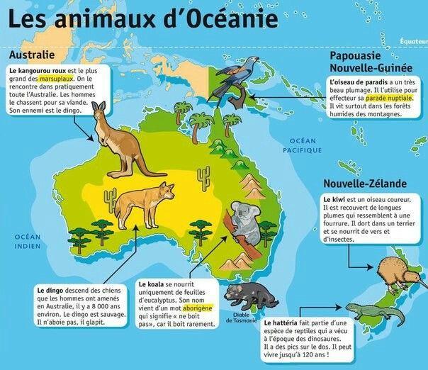Les Animaux D Oceanie Geographie Lecture Documentaire Ce1 Francais Ce1