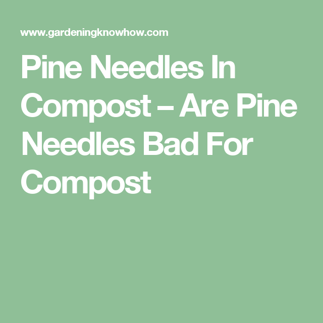 Composting Pine Needles How To Compost Pine Needles Pine Needles Compost Pine