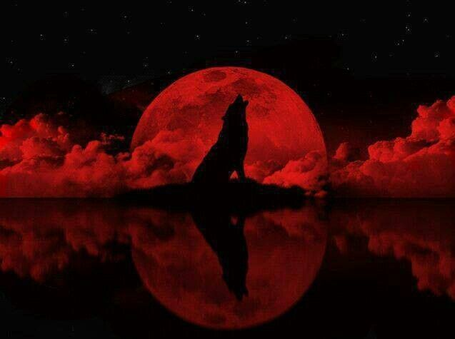 Lobo Aullando Luna Roja Wolves Pinterest Wolf Moon And Wolf