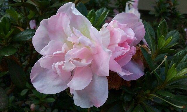 Flores Antioquia