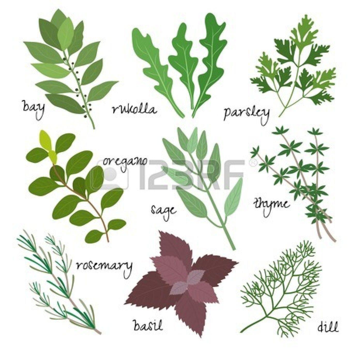 guarigione, medicinali e profumati di erbe