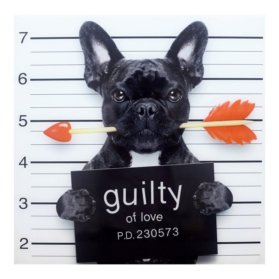 Guilty French Bulldog Valentines day memes, Happy
