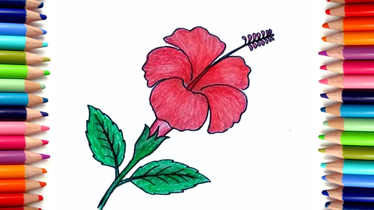 How To Draw A China Rose Hibiscus Flower Drawing Step By Step Flower Drawing Hibiscus Flower Drawing Drawings