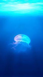 Photo of 30+ Blue Ocean Wallpaper Telefon Hintergründe HD-Bild für iPhone Android-Handy kostenlos herunterladen, …