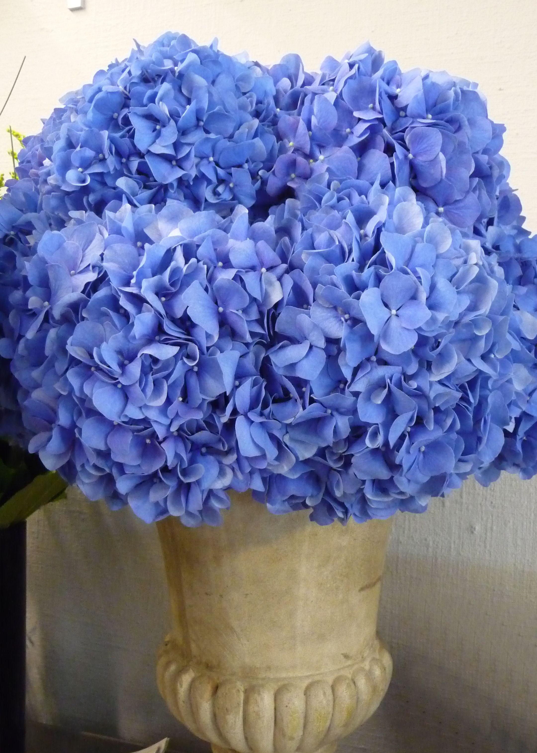 Blue hydrangea heads in an urn for a wedding reception