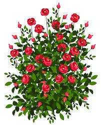 Rose Bush Clip Art Google Search With Images Bush Drawing