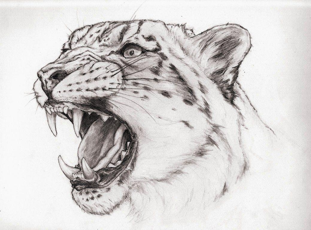 Snow leopard tattoos in 2018 pinterest dessin tatouage and tattoo leopard - Dessin d animaux ...