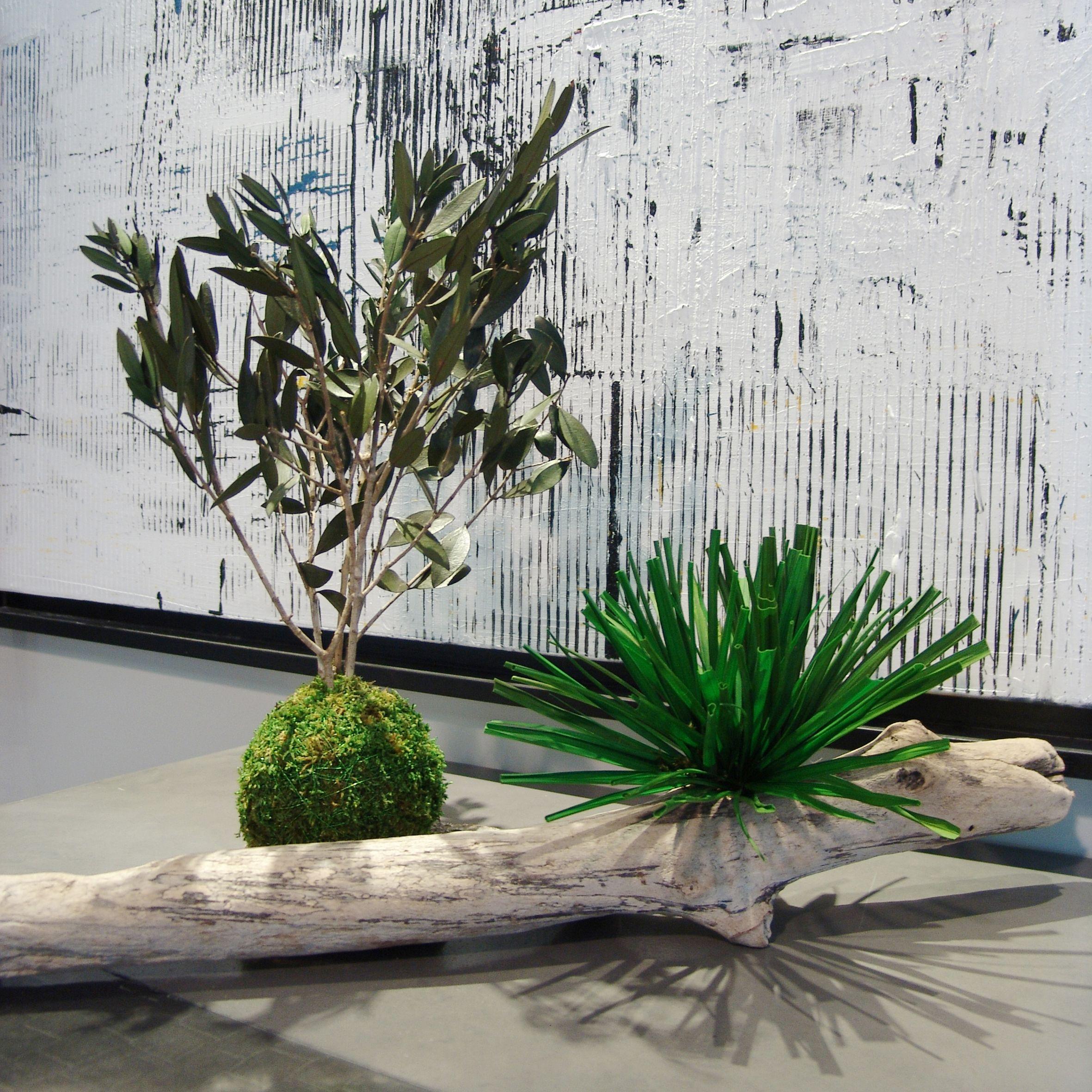 Design Interior Plant Design design plantes et adventive inter