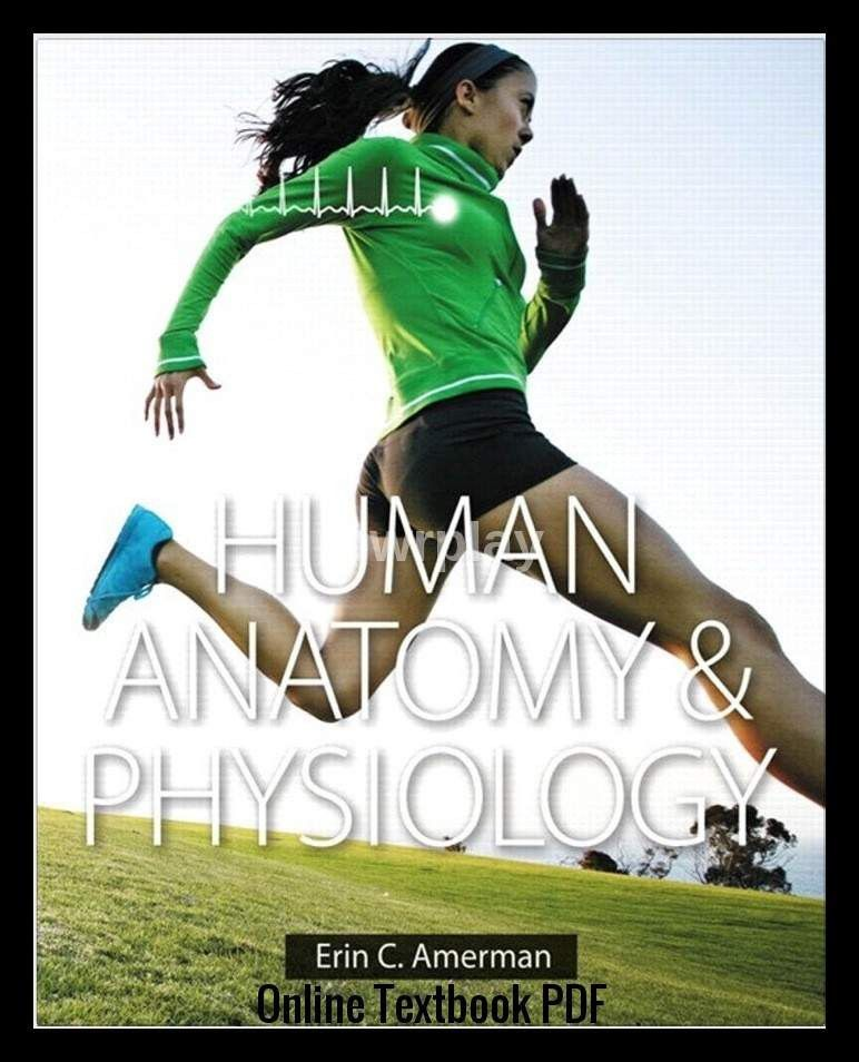 Human Anatomy & Physiology by Erin C. Amerman PDF - $19.99 IMMEDIATE ...