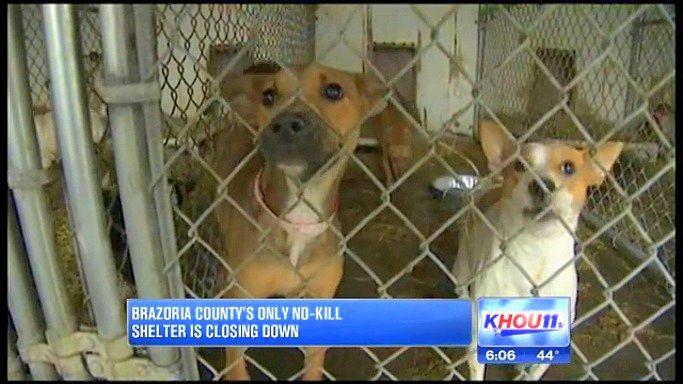 Everything Must Go As Texas No Kill Shelter Closes Dog Adoption Animals Pet Adoption