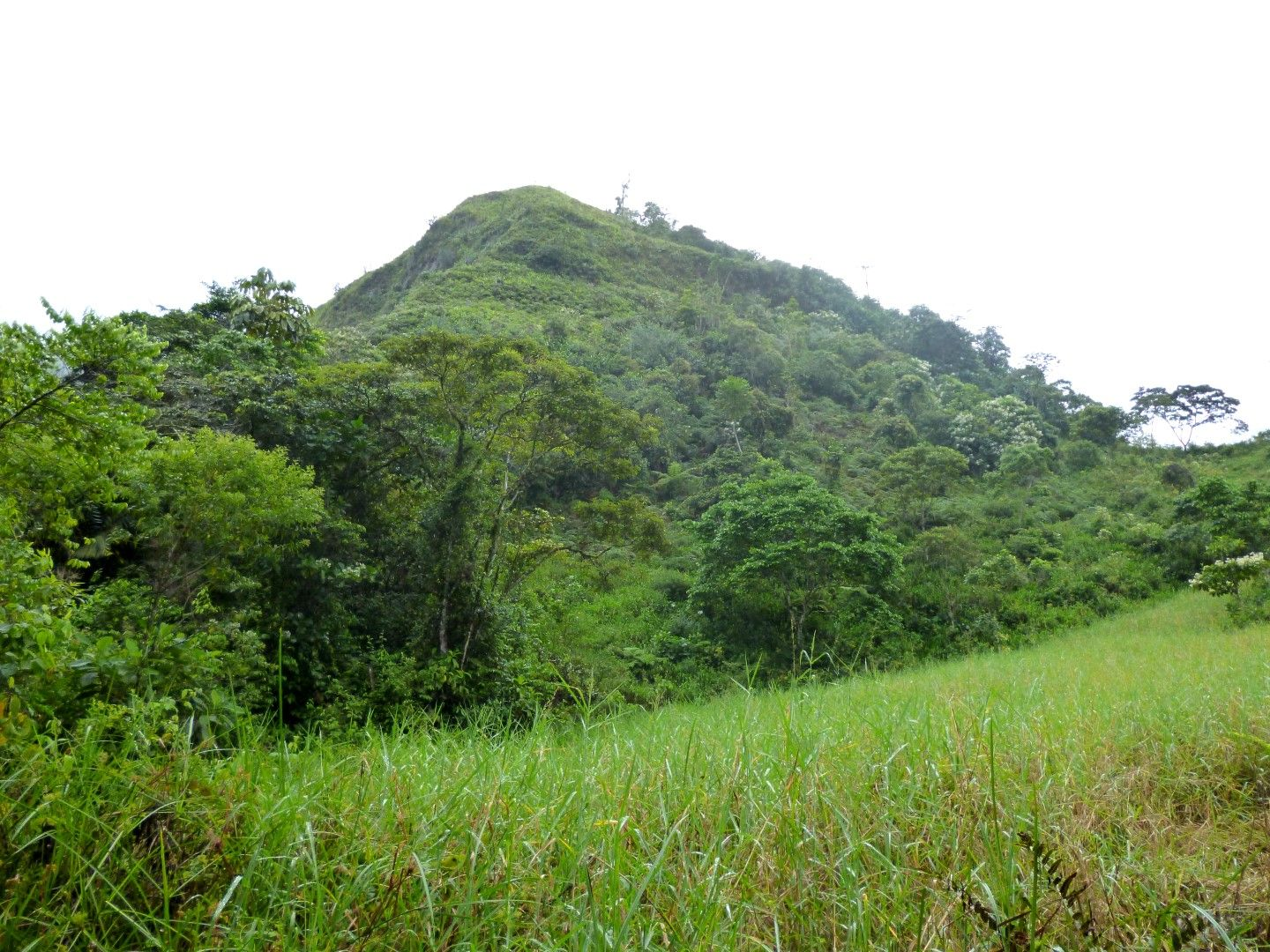 A green hill with tree and indegenous trees