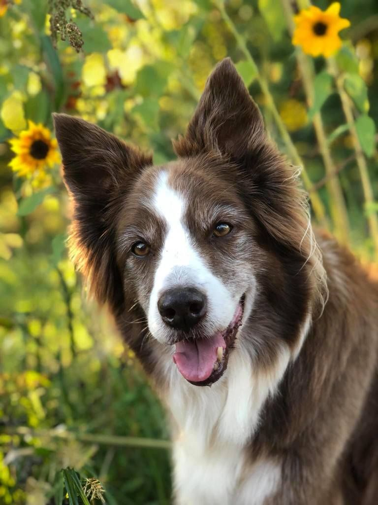Top Say Yes Training Reminders Susan Garrett S Dog Training Blog