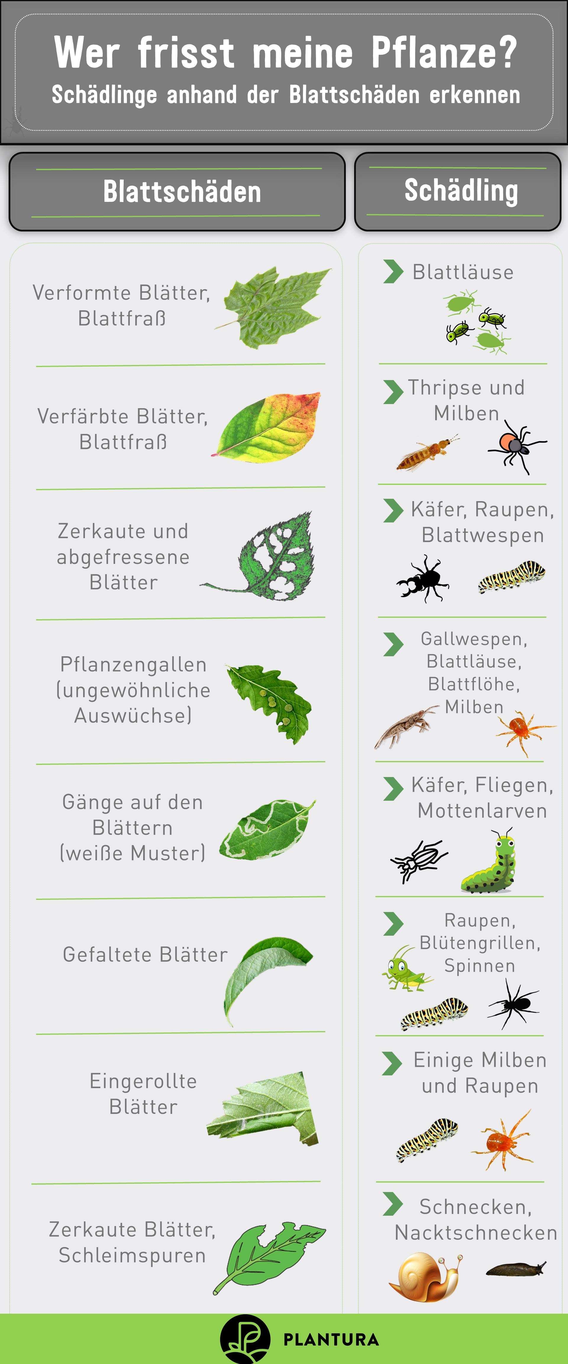 10 Hausmittel Gegen Schadlinge Im Garten Plantura Garten Gegen Hausmittel Plantura Schadlinge In 2020 Potted Plants Patio Ideas Potted Plants Patio Plant Pests