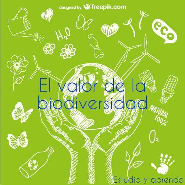 El Valor De La Biodiversidad Cartelera Del Medio Ambiente Fondos Verdes Reciclaje Y Medio Ambiente